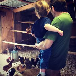 Checking out the chickens