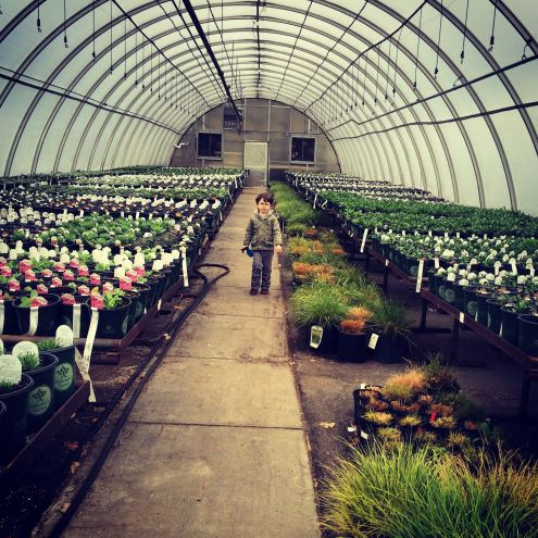 Strolling the greenhouse