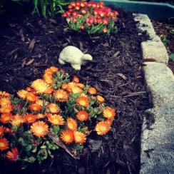 Flowers + turtle