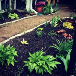 Garden coming together!
