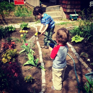 garden, watering, helpers