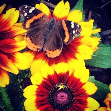 butterfly, butterflies, garden, bee