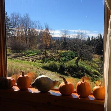 pumpkin view
