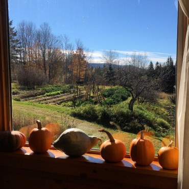 pumpkin view