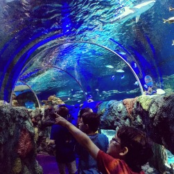 Exploring the aquarium